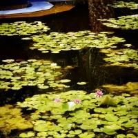 Garden Visit: Jardin Marjorelle, Part 2